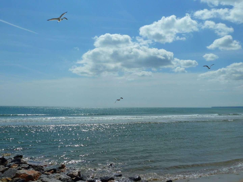 Port la Nouvelle, mer, mouettes