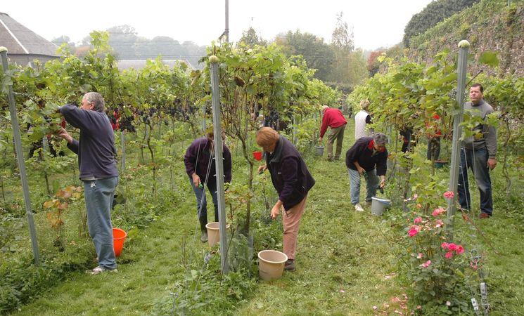 Travail au vignoble de Villers