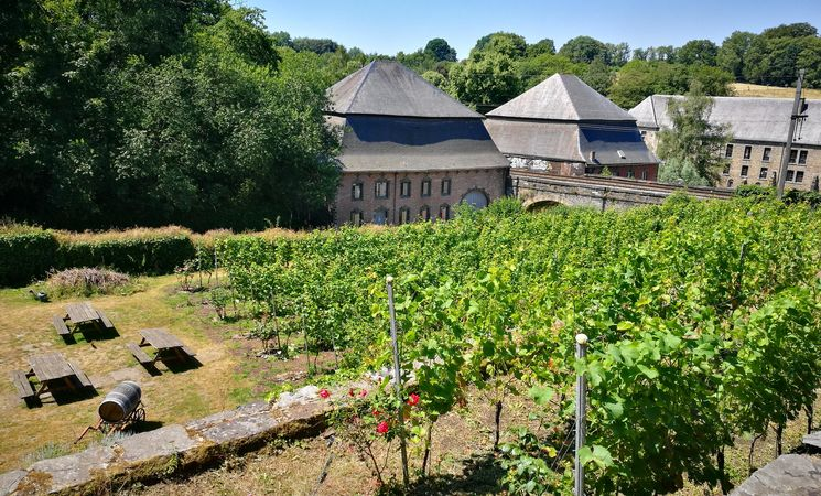 Vignoble de l'Abbaye de Villers-la-Ville 2