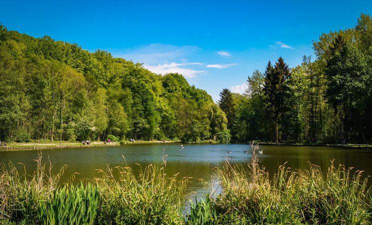 Bois des Rêves_étang