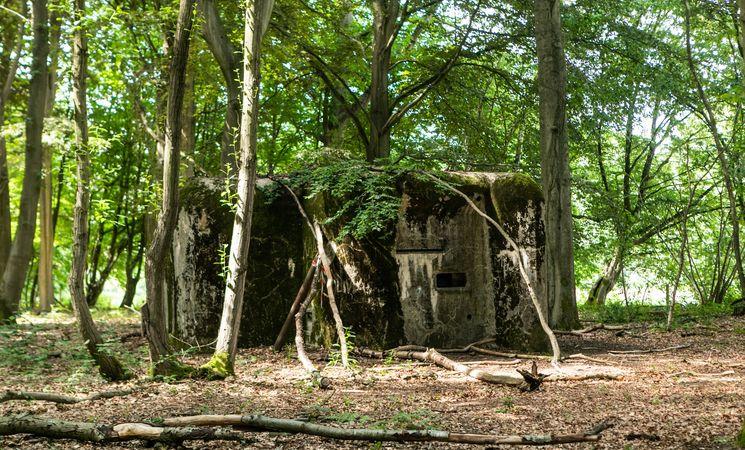 Bois de Beumont 3
