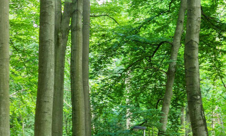 Bois de Beumont 4