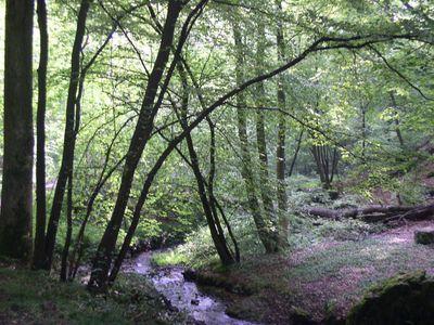 """Het """"Bois des Rocs"""""""