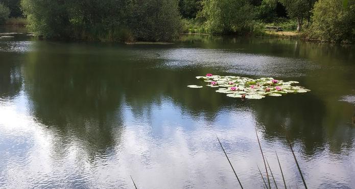 6-etang-avec-nenuphars-en-fleur