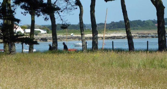Randonnée Ile Grande Pleumeur Bodou (1)
