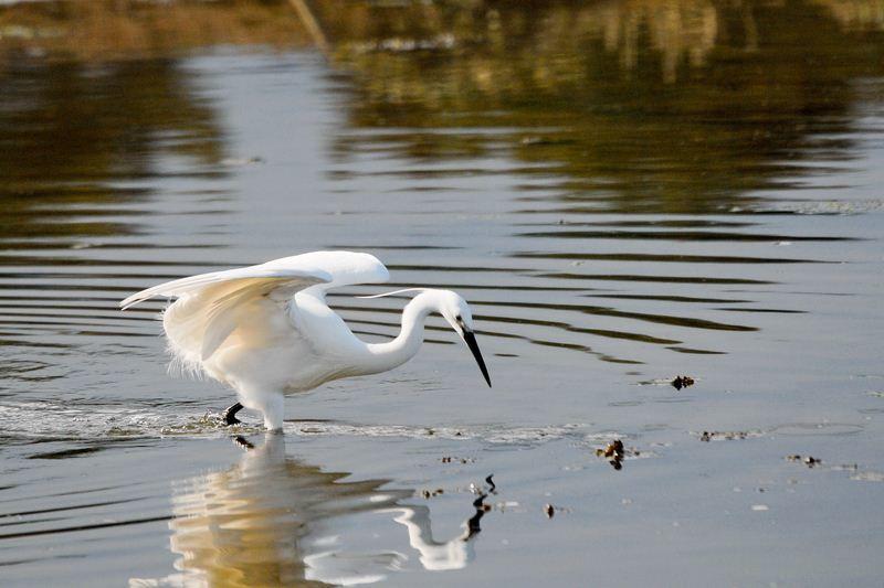 Les oiseaux de l'estuaire du Trieux