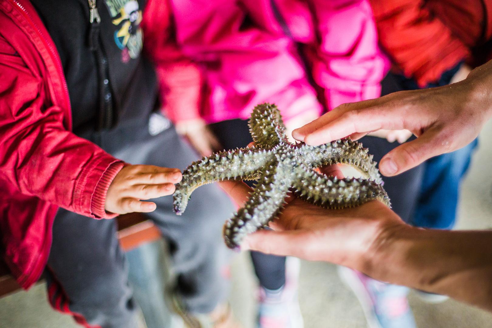 Aquarium Marin 2019.3
