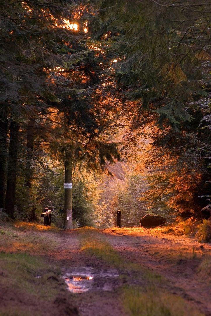Forêt Beffou 2© Samuel Jouon - Déclic'Armor