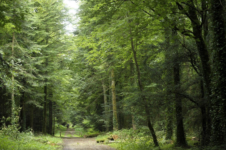 Forêt Beffou3774© Thierry Jeandot