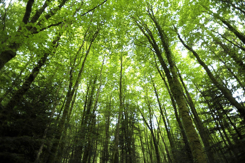 Forêt Beffou3780© Thierry Jeandot