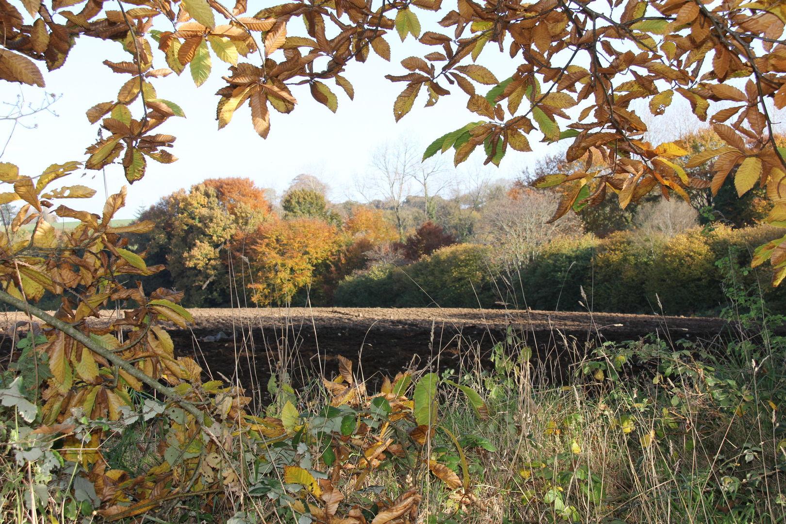Le Palacret en automne