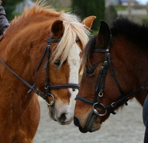 Lannion Equitation 2