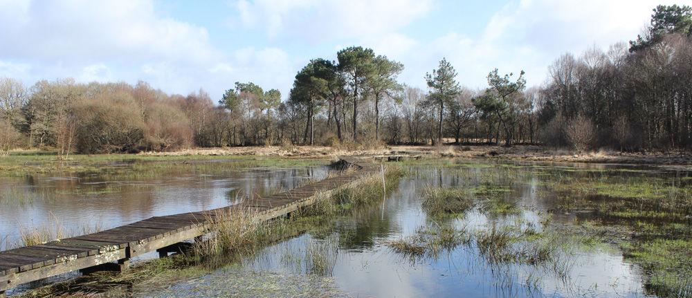 Marais de Magoar- photo Pierrick PUSTOC'H (2)