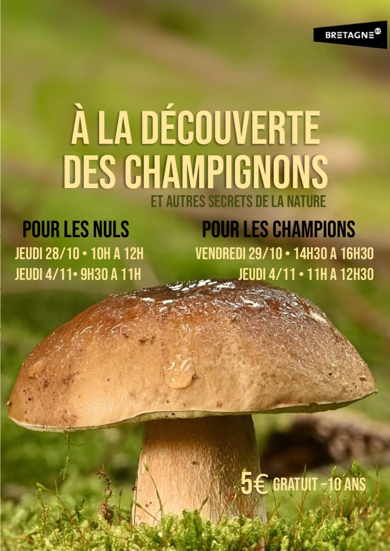 affiche champignons sans logo