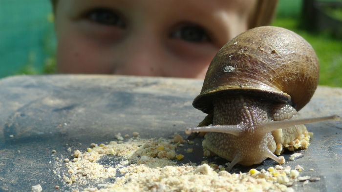 chapeaulescargot-1