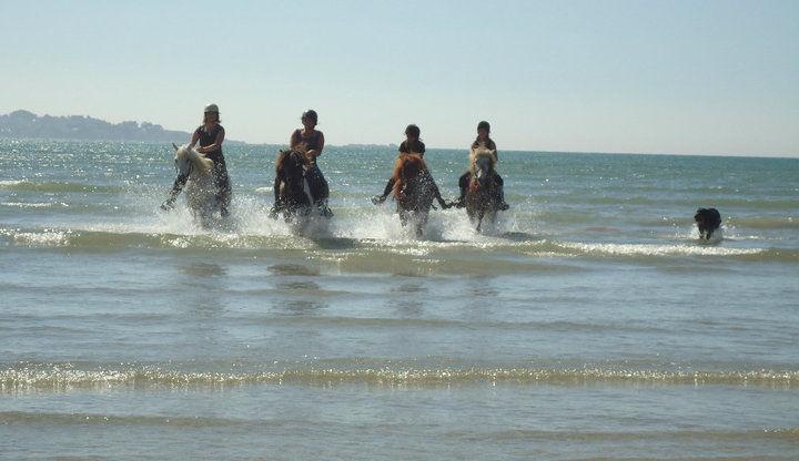 cheval_mer