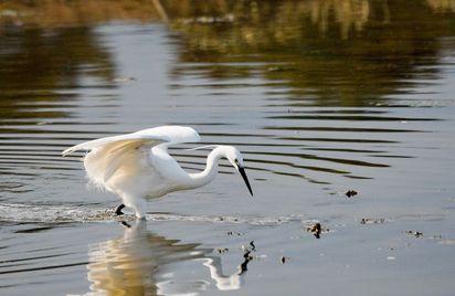 Les oiseaux de l'estuaire
