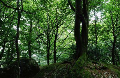 Circuit de la Chaire des Druides - Maël-Pestivien