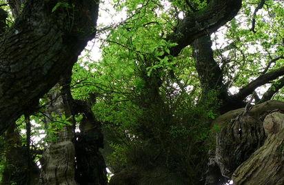 Commune du patrimoine rural de Bretagne de Bulat-Pestivien