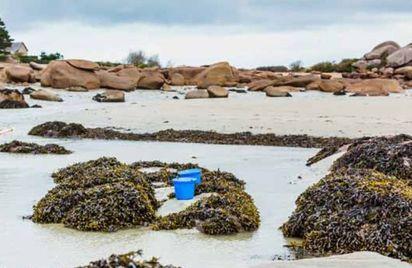 Les algues à marée basse