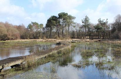 Le Marais de Magoar Penvern