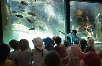 Visite guidée de l'Aquarium Marin de Trégastel