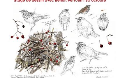 Dessine avec Benoit Perrotin