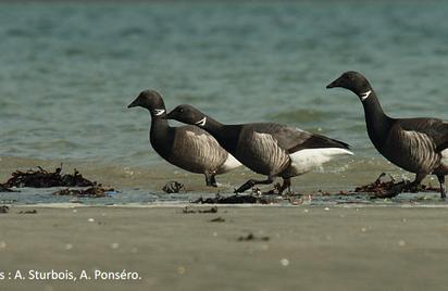 Exposition - Les oiseaux migrateurs