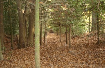 Enquête nature en forêt