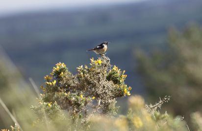 Site naturel des Landes de Locarn
