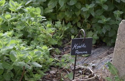 Visite d'une production d'herbes aromatiques - Visite guidée
