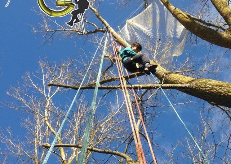 Grimpe arbres - L'Isle-Jourdain