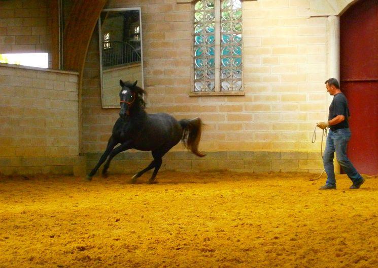 Séjour équitation aux Crinières de l'Aube