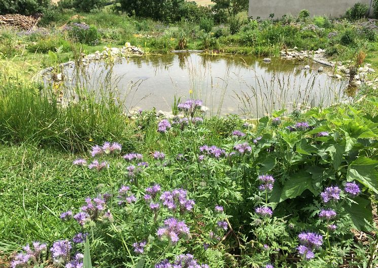 Photo bassin fleuri