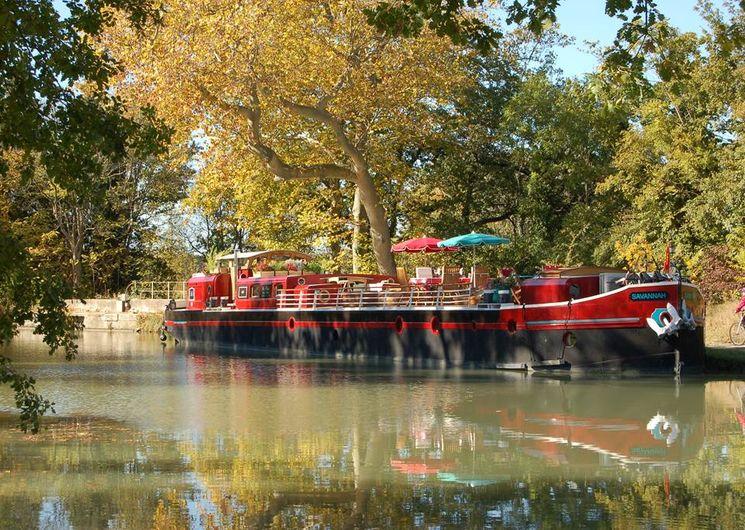 Savannah automne