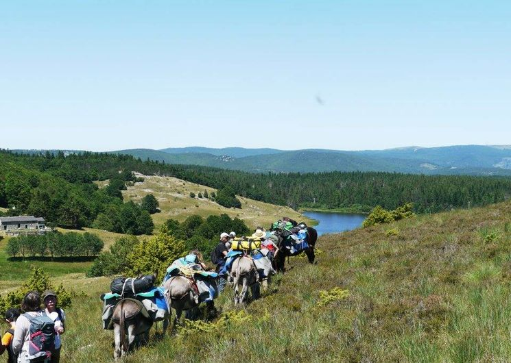 Astronomie en Cévennes et Randonnée itinérante avec les ânes dans les Cévennes