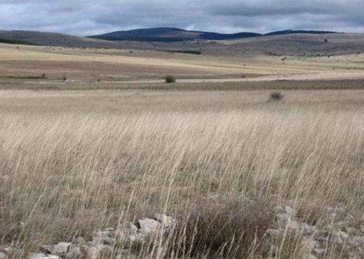 Gorges du Tarn, Jonte et causses en randonnée