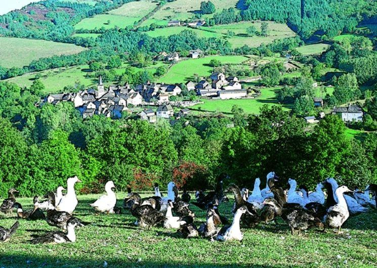 Visite de la ferme Félix Gourmand