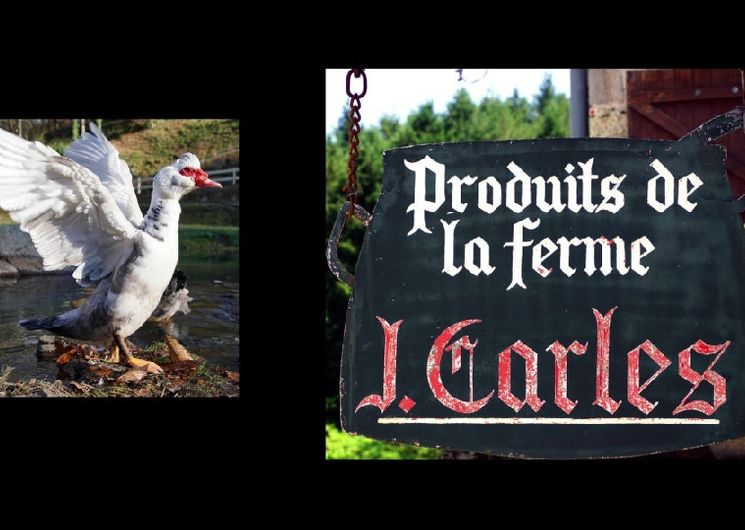 Table Paysanne Ferme Jacques Carles