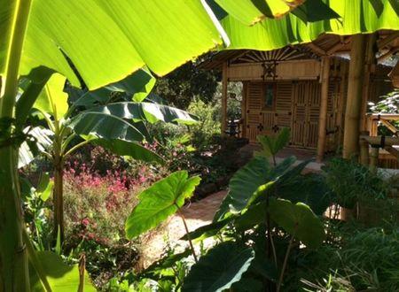 Coco Banane aux Jardins de Valaurie
