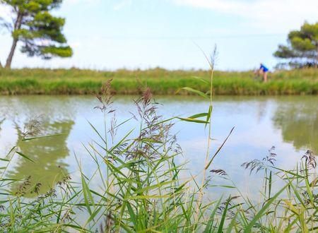 Une réserve naturelle au cœur de la Narbonnaise