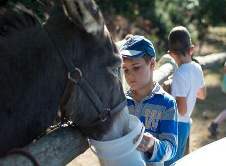 Balade avec mon ami l'âne