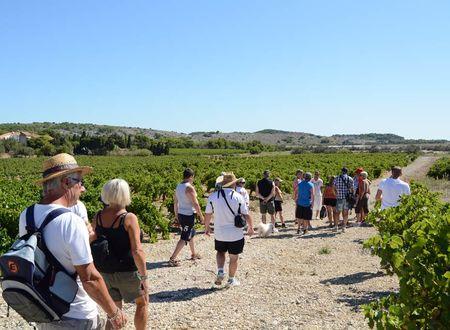 Balade vigneronne autour de Gruissan
