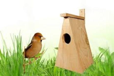 Atelier nature pour les 3 à 6 ans : Mangeoires à oiseaux