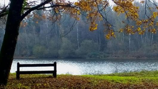 Balade : contes et légendes en forêt d'Orléans