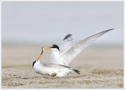 Sortie naturaliste accompagnée : Les ailes de l'hiver