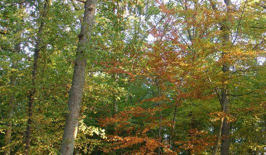Montargis National Forest