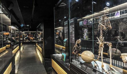 MOBE - Muséum d'Orléans pour la Biodiversité et l'Environnement