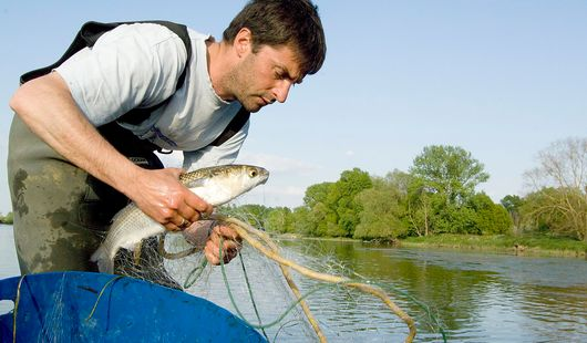 Pêcheurs de Loire