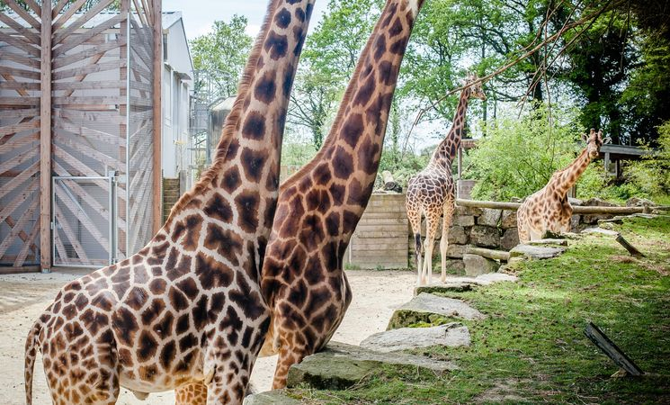 parc animalier Morbihan ; loisirs Bretagne sud ; Groix